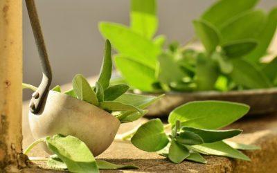 Heilung aus der Natur – Alternative Behandlungsmethoden bei Polyneurophatie (Teil 2)